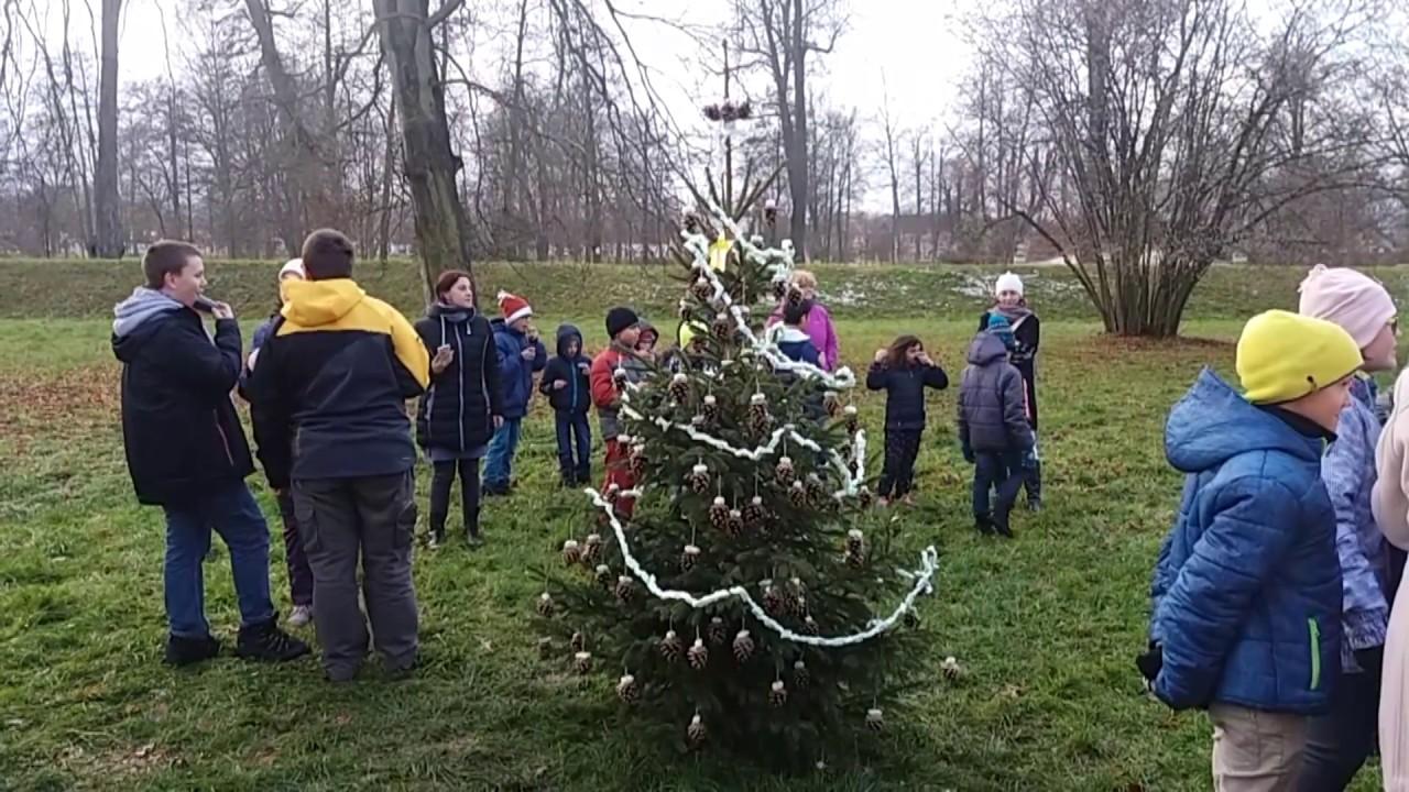 Vánoční stromkování v parku