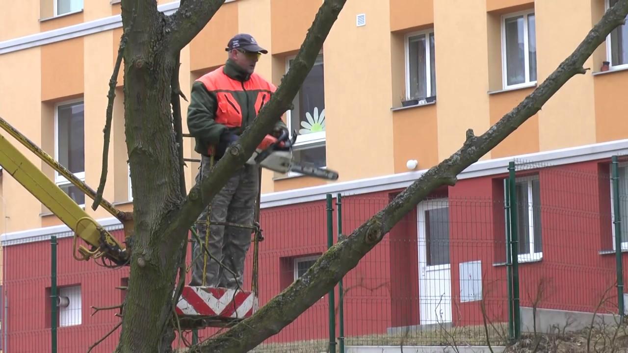 Kácení stromů a keřů ve městě