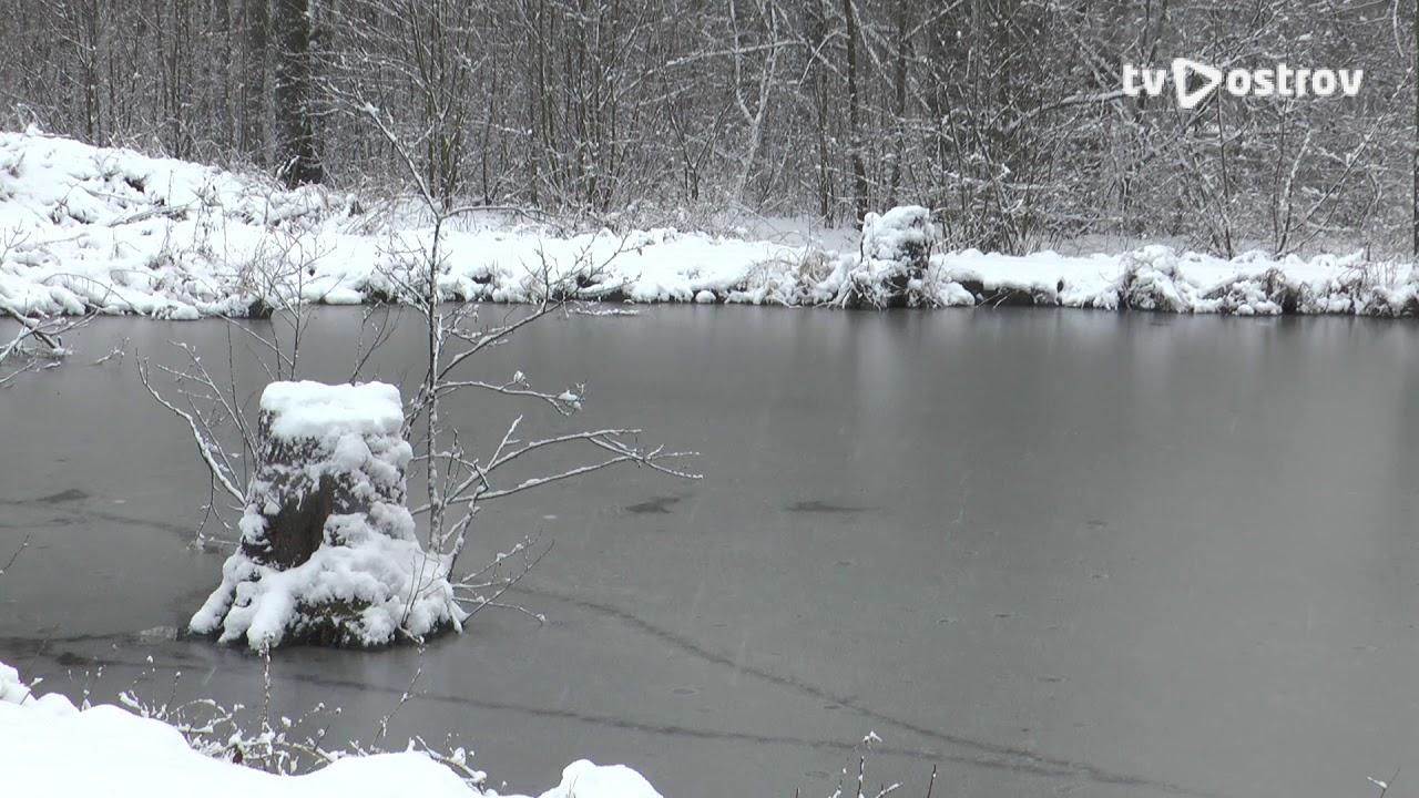 Borecký rybník